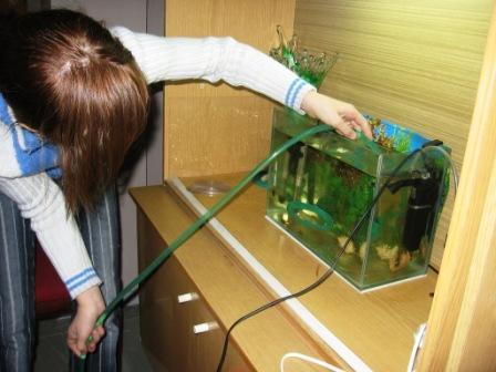 Чистить аквариум в домашних условиях 425